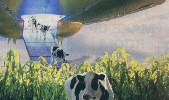Alien Cows – Funny Pics & Memes of the Hilarious & Weird