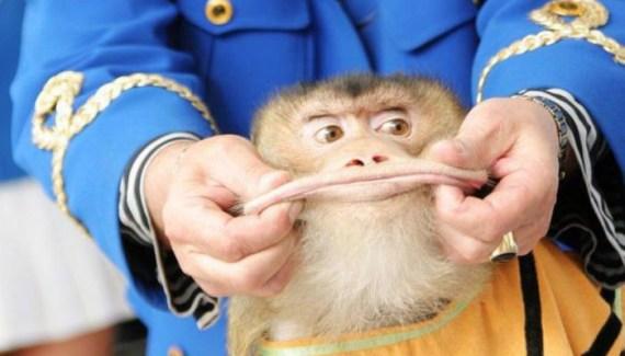 Man pinching monkey's lips making funny face