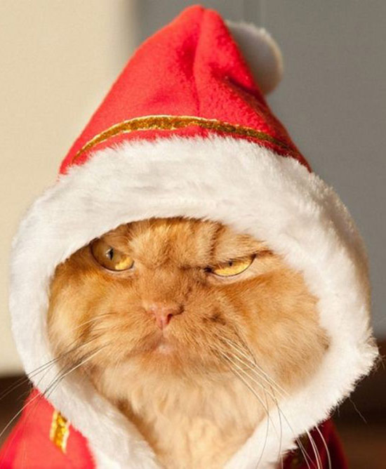 26 Funny Awkward Christmas Photos ~ grumpy cat grinch in santa hat