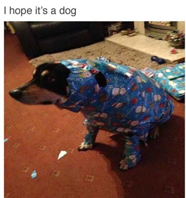 41 Funny Christmas Photos ~ meme dog in wrapping paper, hope it's a dog