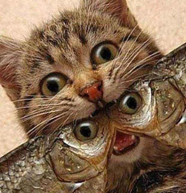 33 Funny Pics of Random Offbeat Weirdness ~ creepy cat with fishes in mouth