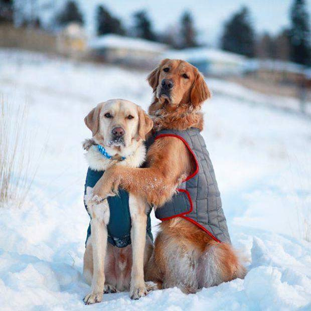 33 Funny Pics of Random Offbeat Weirdness ~ cute dog couple in snow