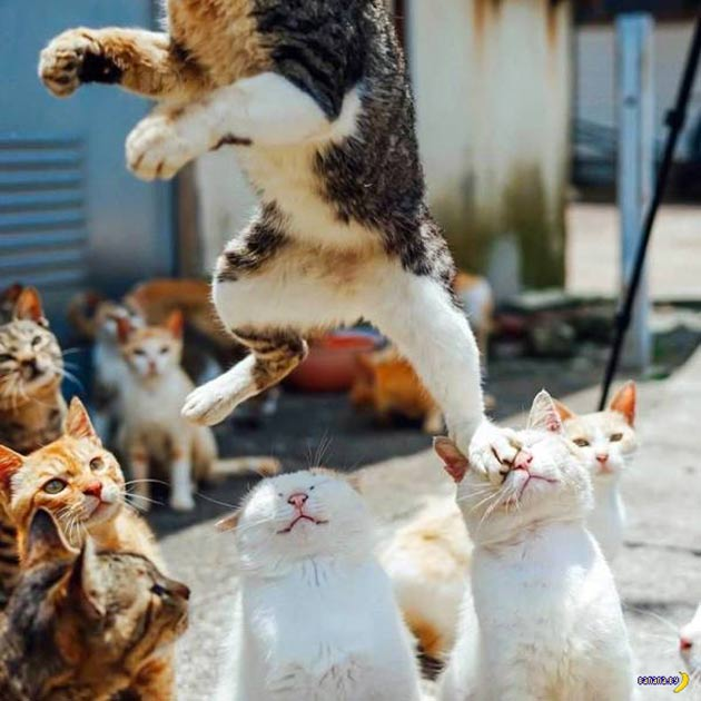 Funny cats ~ in your face!
