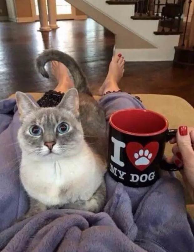 Funny cat pic, angry cat on woman's lap hold a I love my dog mug