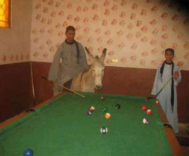 Strange pic of man on donkey playing pool