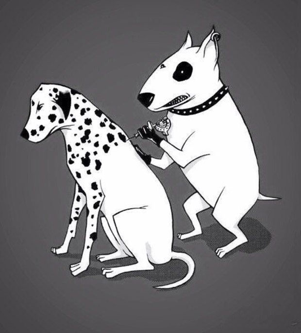 Dog Tattooing ~ Giving a Dalmatian her spots ~ 35 Funny Pics & Memes