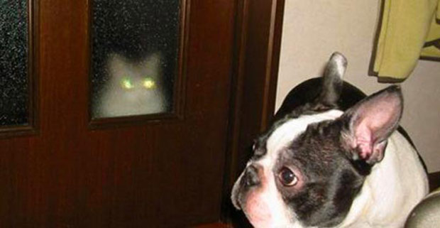 Hilarious Photobombing Cats Proving What Assholes They Can Be