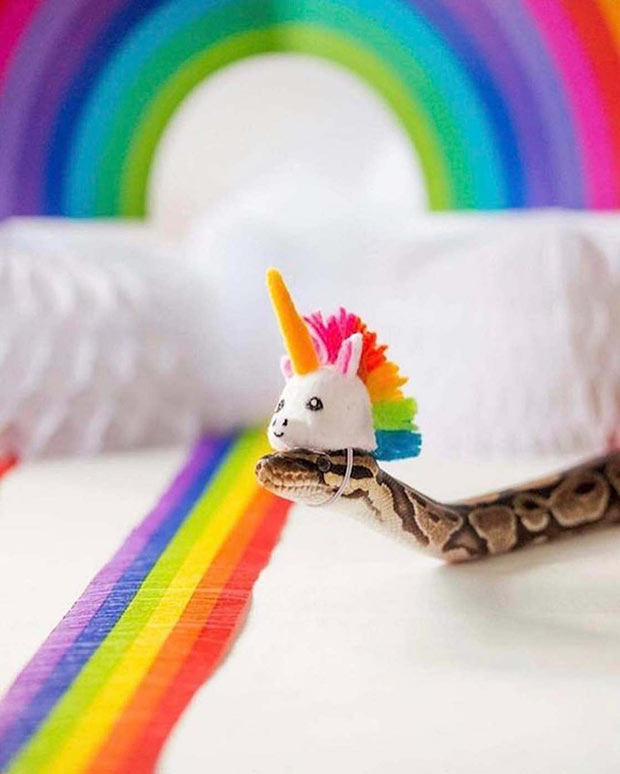 Cute snake with unicorn head hat ~ 35 Funny Pics & Memes