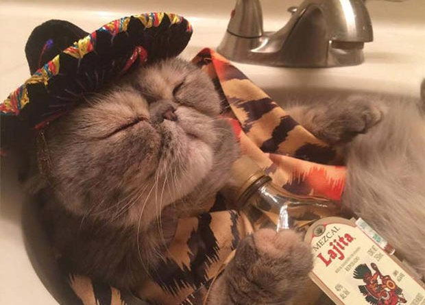Another Thursday night at my house! ... ~~ funny pics drunk cat opposed out in sink tequila sombrero