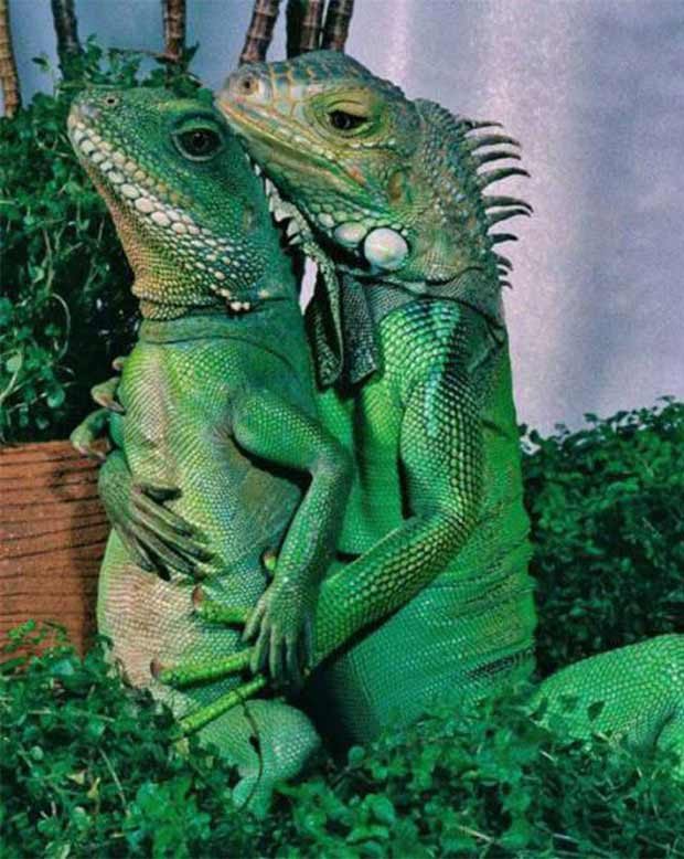 """Isn't this a scene in the movie """"Ghost?"""" .... ...spooning lizards ~~ 37 funny pics & memes"""