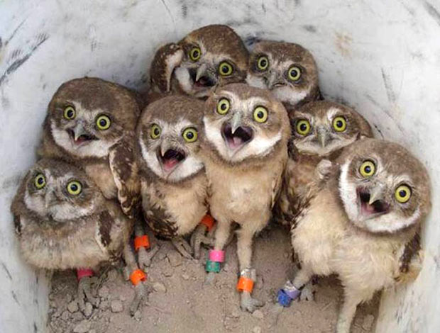 Surprise! ~.~ funny pics & memes baby owls