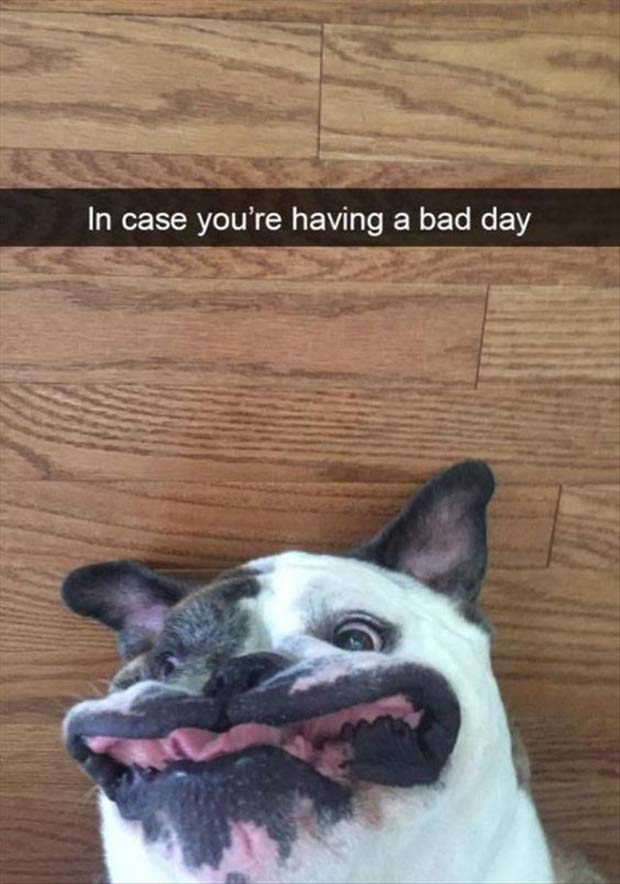 Snapchat Classics ~ in case you'e having a bad day, funny dog face