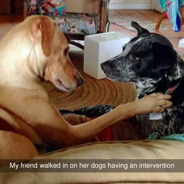 Best Snapchats ~ dog intervention