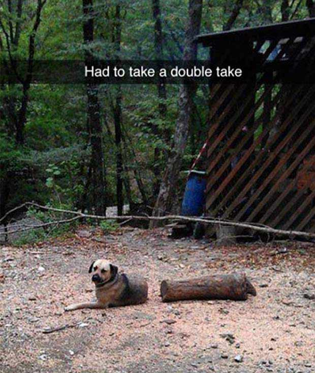 Great Snapchats ~ dog double take cut in half