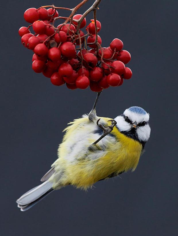 Best bird photos ~ Funny Pics & Memes