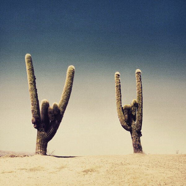 Rock'n'roll cactus ~ Funny Pics & Memes
