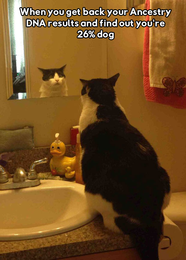 Cat Meme ~ When you get back your Ancestry DNA results and find our your 26% dog ~ Funny Pics & Memes