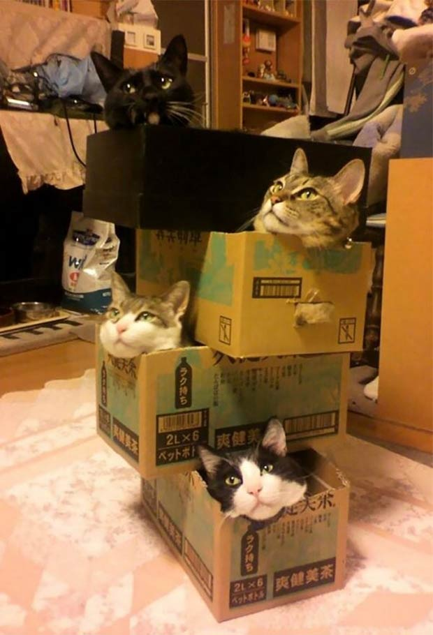Funny Cats in boxes ~ Funny Pics & Memes