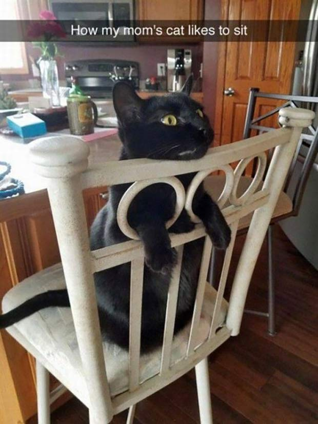 Funny Snapchat cat in chair ~ Funny Pics & Memes