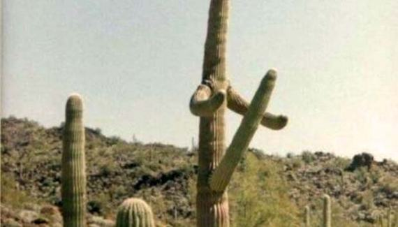 Now that's a prickly prick! ~ funny pics & memes ~ cachet with giant penis limb