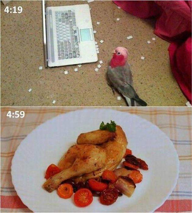 What goes around comes around ~ parakeet that pecked out letters from computer keyboard cooked for dinner ~ funny pics & memes