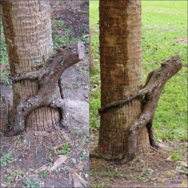 Funny Groot tree roots humping tree