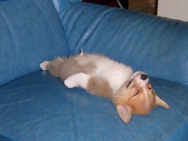 Funny Dogs ~ I think it's broken ~ sleeping on back on couch