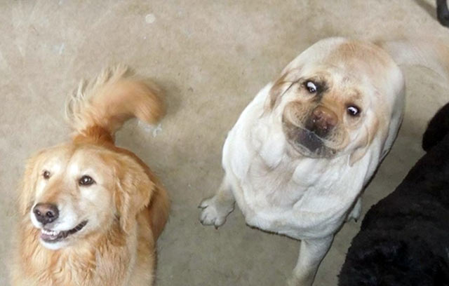 Funny Dogs ~ I think it's broken ~ funny face bloated