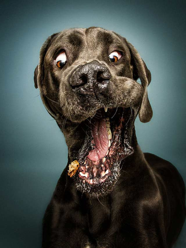 Funny Dogs ~ I think it's broken ~ catching treat