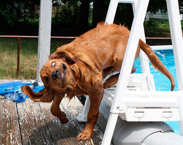 Funny Dogs ~ I think it's broken ~ pool