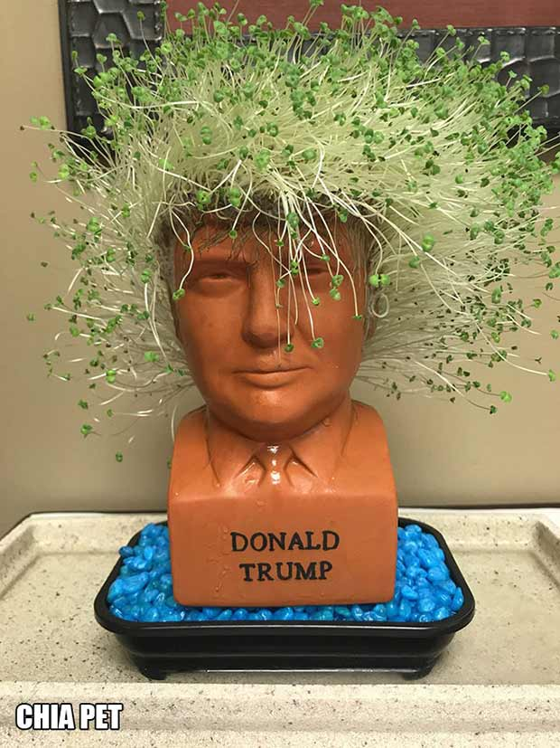 Trump Chia Pet ~ 18  Best Christmas Gifts for Trump Lovers and Haters