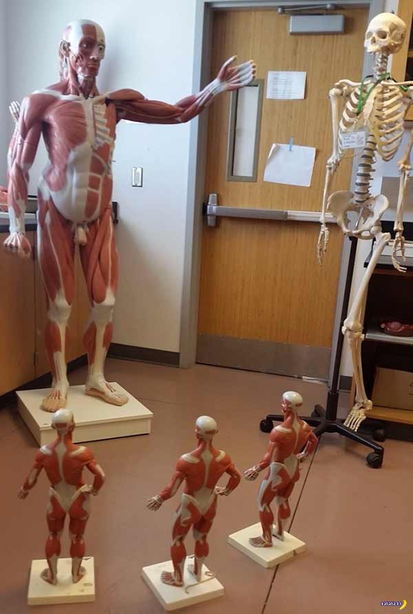 When anatomy class lectures get creepy ~ funny pics and memes