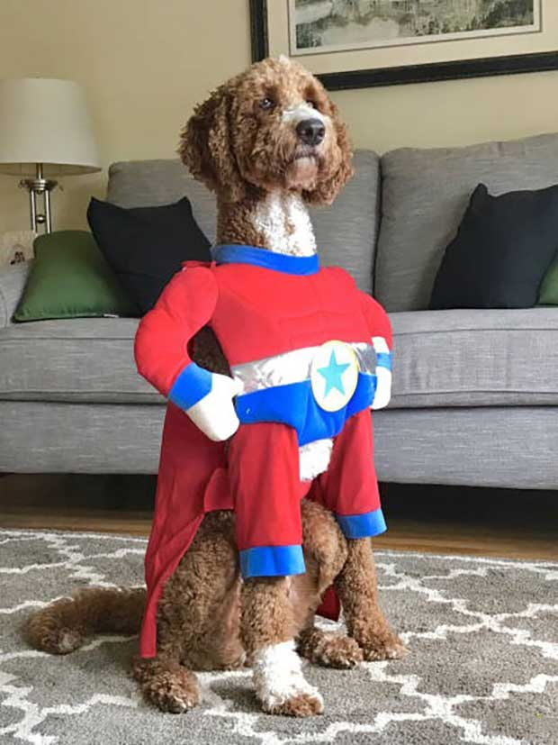 Super dog! ~ funny pics and memes ~ dog in superhero costume