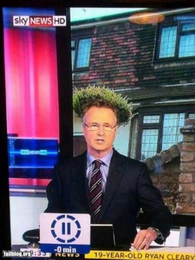 bird nest hall on newscasters head ~.~satisfying perfectly time photos