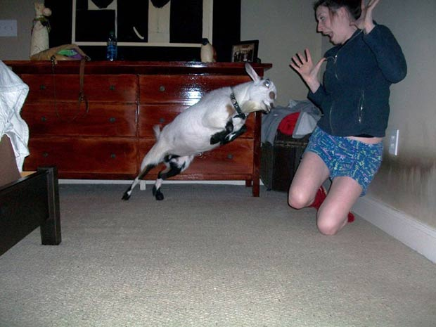 What I wanna know is why is the goat in the house? ~.~satisfying perfectly time photos