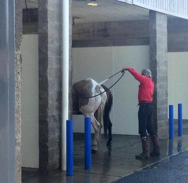 Carl washing his vintage Pinto ~.~ funny pics, funny memes ~ man washing his horse at car wash
