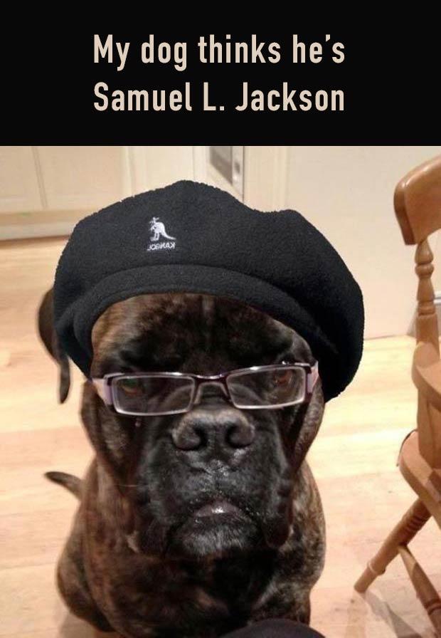 33 Funny Pics and Memes, and Random Humor ~ Cute Dog, dog meme looks like Samual L. Jackson