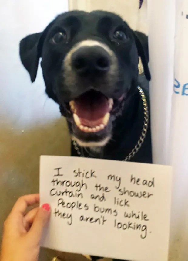 Funny dog shaming ~ Adult Humor ~ 31 Funny Memes and Pics ~