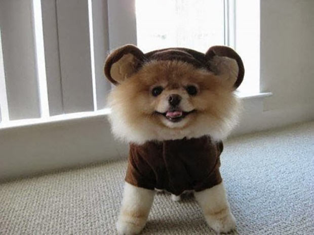 33 Happy Funny Animals Guaranteed to Raise Your Smile ~ cute dog