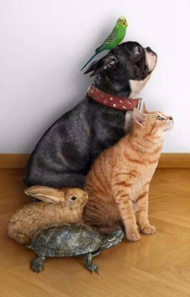 35 Funny Memes and Pic Ya Gotta See ~ Animals posing together