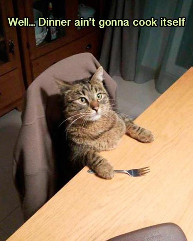 Random Humor : 35 Funny Pics and Memes ~ funny cat meme