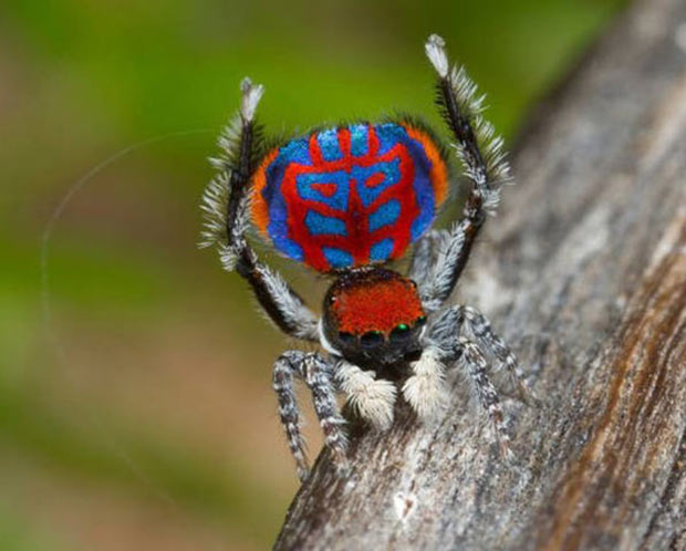 33 Funny Animals Guaranteed to Raise Your Smile ~ spider