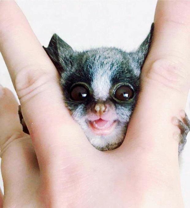 Random Humor : 35 Funny Pics and Memes ~ funny animals smile