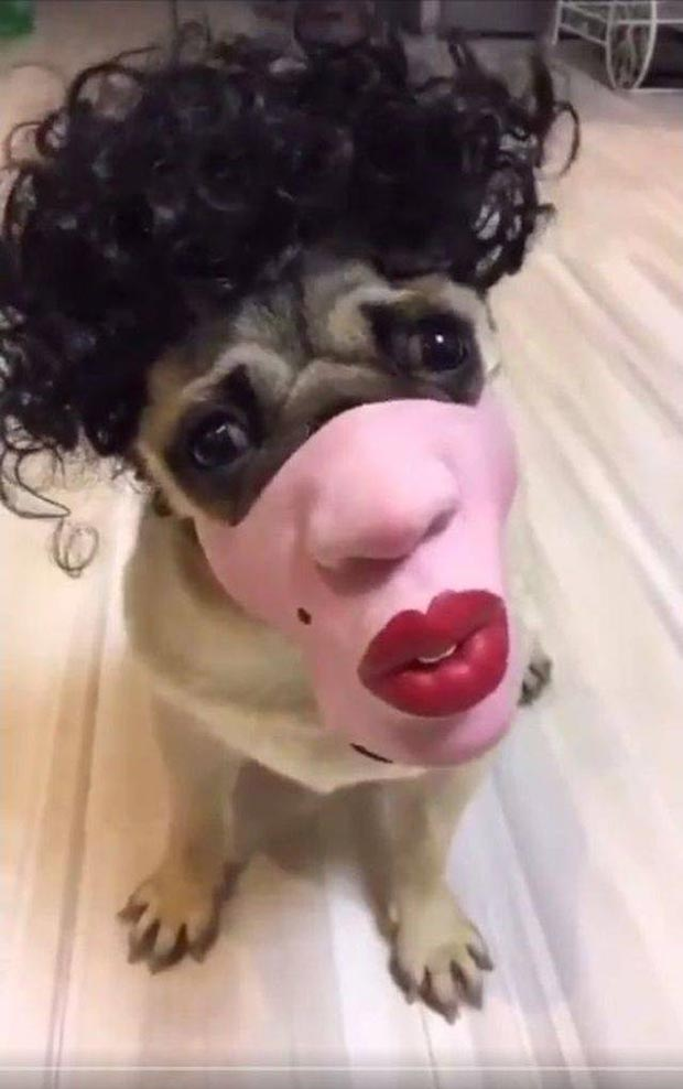 35 Funny Pics and Memes Ya Gotta See ~ dog halloween costume