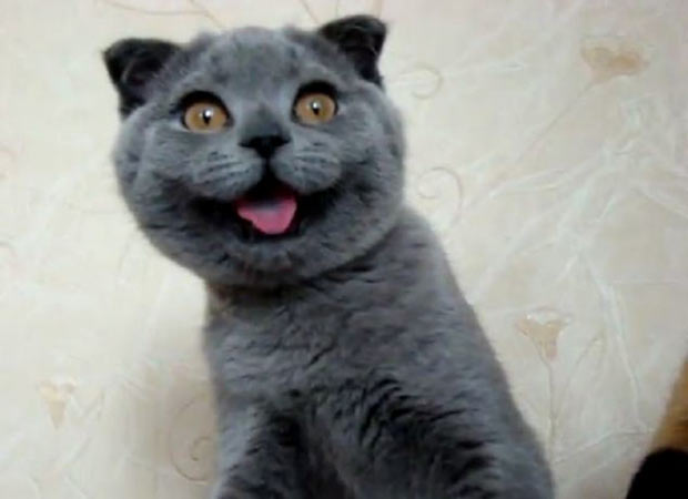 33 Happy Animals Guaranteed to Raise Your Smile ~ funny Cat
