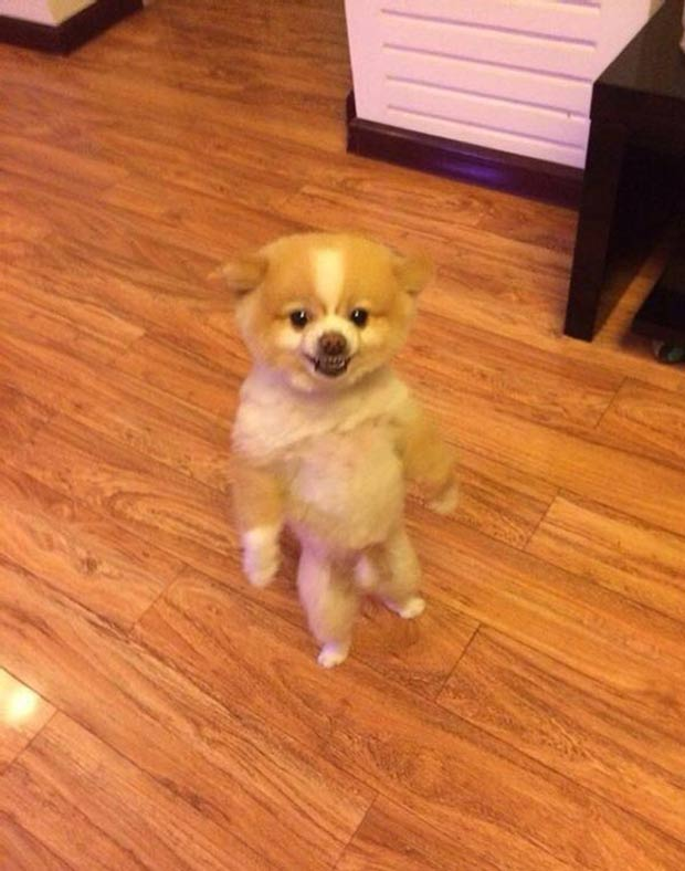 33 Funny Animals Guaranteed to Raise You Smile ~ Happy Dog Standing Up