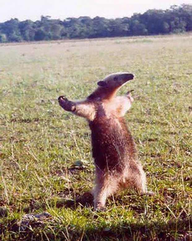 33 Funny Animals Guaranteed to Raise Your Smile ~ Happy Ant Eater