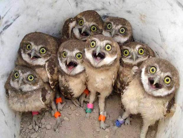 33 Funny Animals Guaranteed to Raise Your Smile ~ happy baby owls