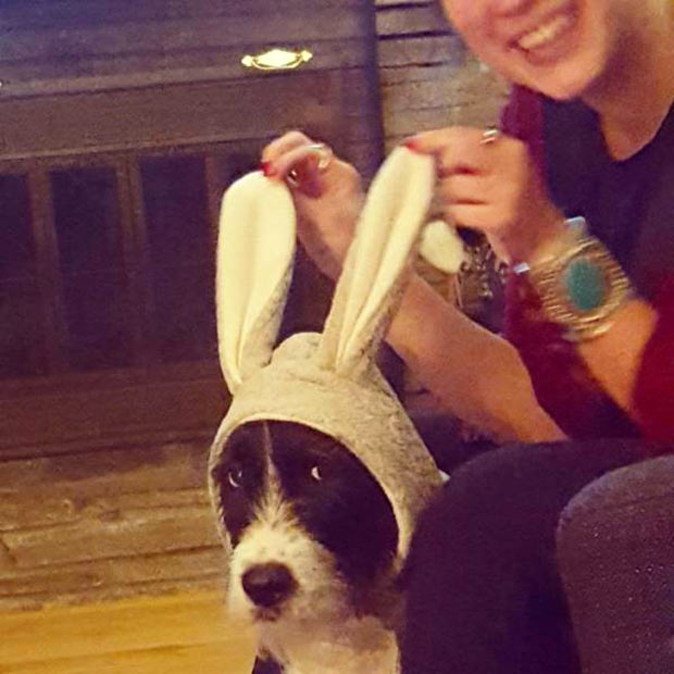 35 Funny Memes and Random Pics to Boost Your Humor Level... unimpressed dog in bunny ears, cute animals