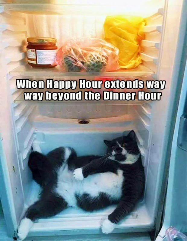 35 Funny Memes and Random Pics to Boost Your Humor Level... cat in refrigerator, happy hour